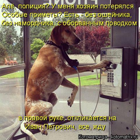 Котоматрица: Алё, полиция? У меня хозяин потерялся Особые приметы? Есть - без ошейника, без намордника, с оборванным поводком в правой руке, откликается н