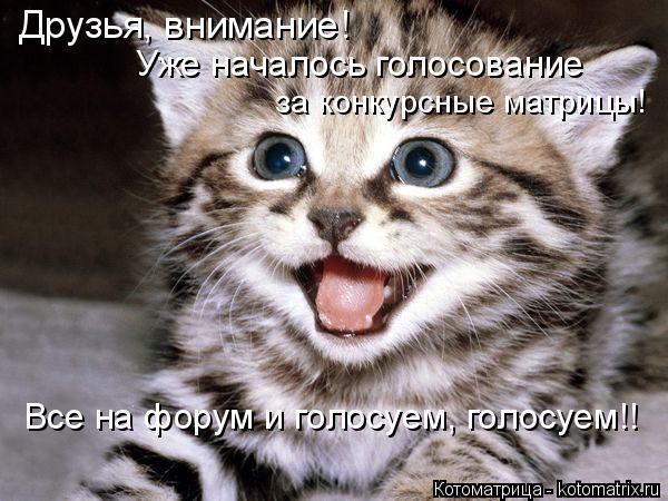 Котоматрица: Друзья, внимание!  Уже началось голосование за конкурсные матрицы! Все на форум и голосуем, голосуем!!