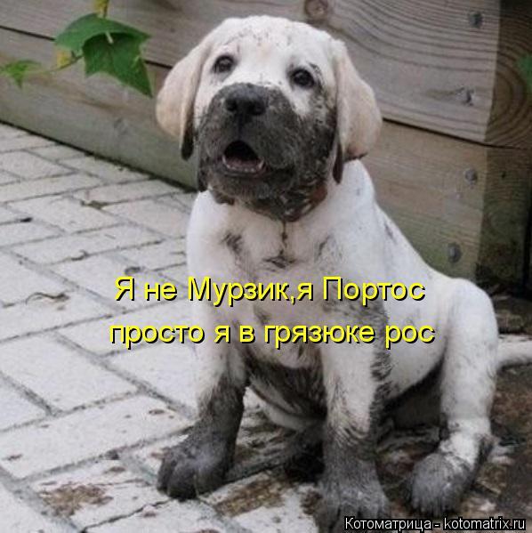 Котоматрица: Я не Мурзик,я Портос просто я в грязюке рос