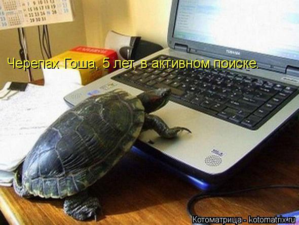 Котоматрица: Черепах Гоша, 5 лет, в активном поиске.