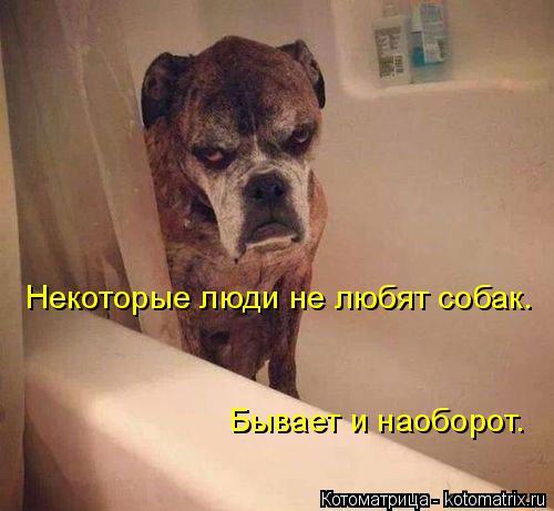 Котоматрица: Некоторые люди не любят собак. Бывает и наоборот.