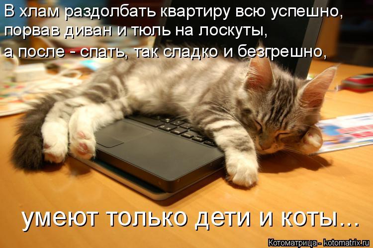 Котоматрица: В хлам раздолбать квартиру всю успешно, порвав диван и тюль на лоскуты, а после - спать, так сладко и безгрешно, умеют только дети и коты...