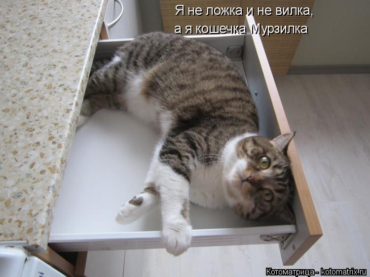 Котоматрица: Я не ложка и не вилка, а я кошечка Мурзилка