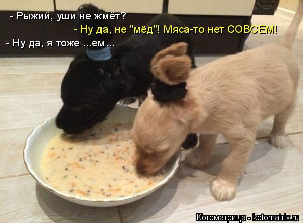 "Котоматрица: - Рыжий, уши не жмёт? - Ну да, не ""мёд""! Мяса-то нет СОВСЕМ! - Ну да, я тоже ...ем..."
