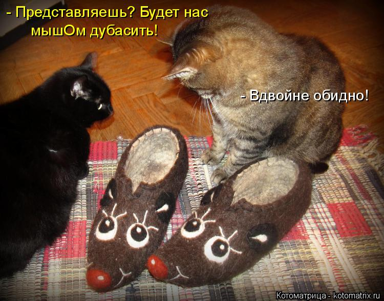 http://kotomatrix.ru/images/lolz/2014/12/28/kotomatritsa_Vp.jpg