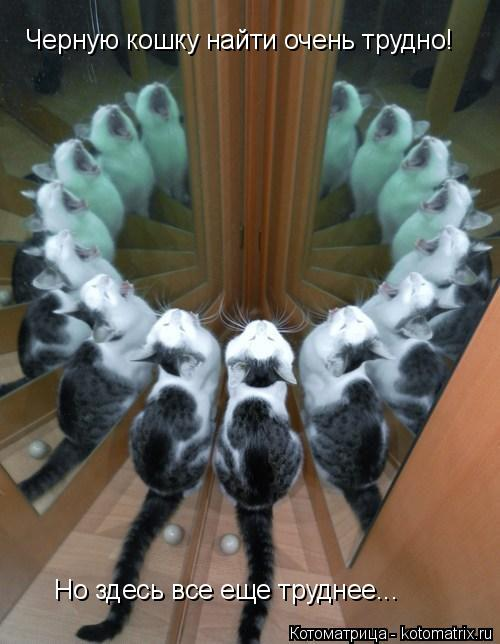 Котоматрица: Черную кошку найти очень трудно!  Но здесь все еще труднее...