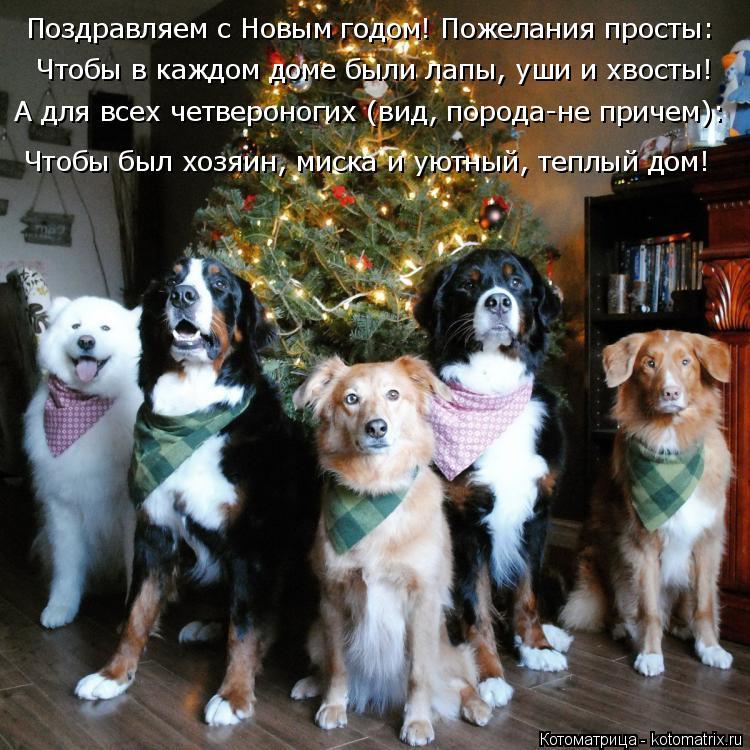 Котоматрица: Поздравляем с Новым годом! Пожелания просты:  Чтобы в каждом доме были лапы, уши и хвосты! А для всех четвероногих (вид, порода-не причем): Что