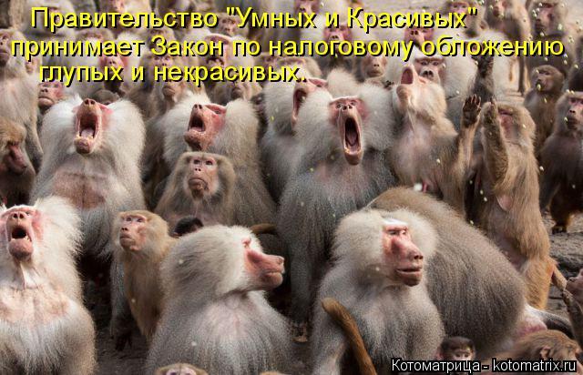 """Котоматрица: Правительство """"Умных и Красивых"""" принимает Закон по налоговому обложению глупых и некрасивых."""