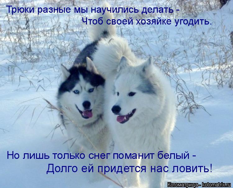 Котоматрица: Трюки разные мы научились делать - Чтоб своей хозяйке угодить. Но лишь только снег поманит белый - Долго ей придется нас ловить!