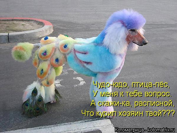 Котоматрица: Чудо-юдо, птица-пёс, У меня к тебе вопрос. А скажи-ка, расписной, Что курил хозяин твой???