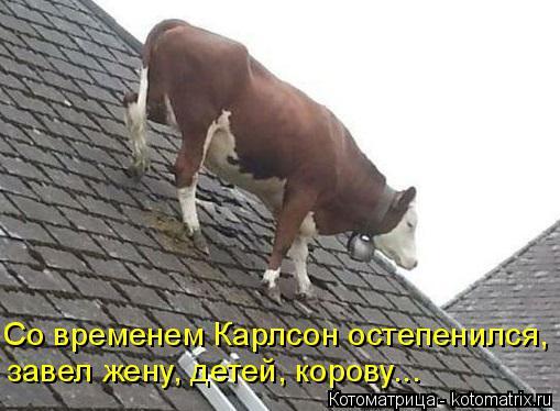 Котоматрица: завел жену, детей, корову... Со временем Карлсон остепенился,