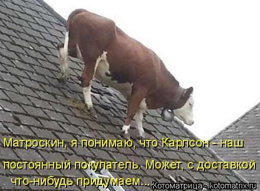 Котоматрица: Матроскин, я понимаю, что Карлсон - наш постоянный покупатель. Может, с доставкой что-нибудь придумаем....