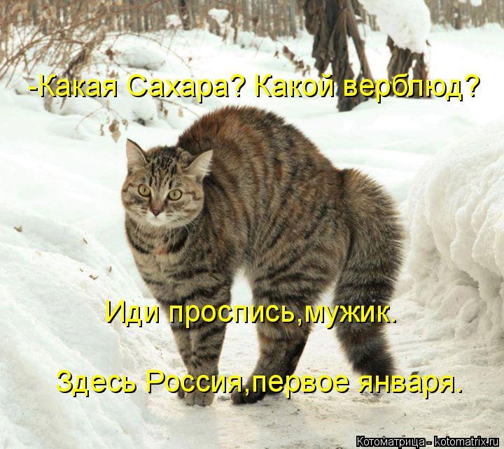 Котоматрица: -Какая Сахара? Какой верблюд? Иди проспись,мужик. Здесь Россия,первое января.