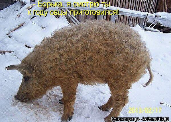 Котоматрица: - Борька, я смотрю ты  к году овцы приготовился!