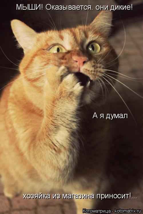 Котоматрица: МЫШИ! Оказывается. они дикие!   А я думал   хозяйка из магазина приносит!...