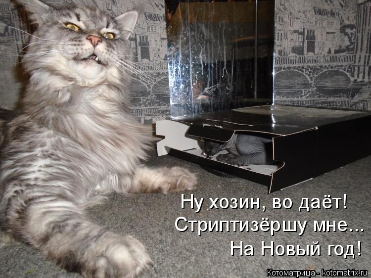 Котоматрица: Стриптизёршу мне... На Новый год! Ну хозин, во даёт!