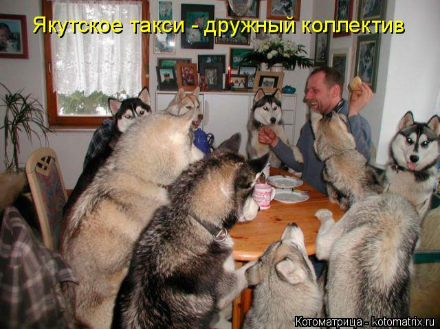 Котоматрица: Якутское такси - дружный коллектив