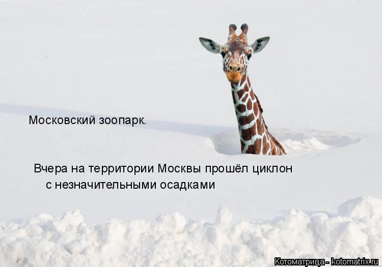 Котоматрица: Московский зоопарк. Вчера на территории Москвы прошёл циклон с незначительными осадками