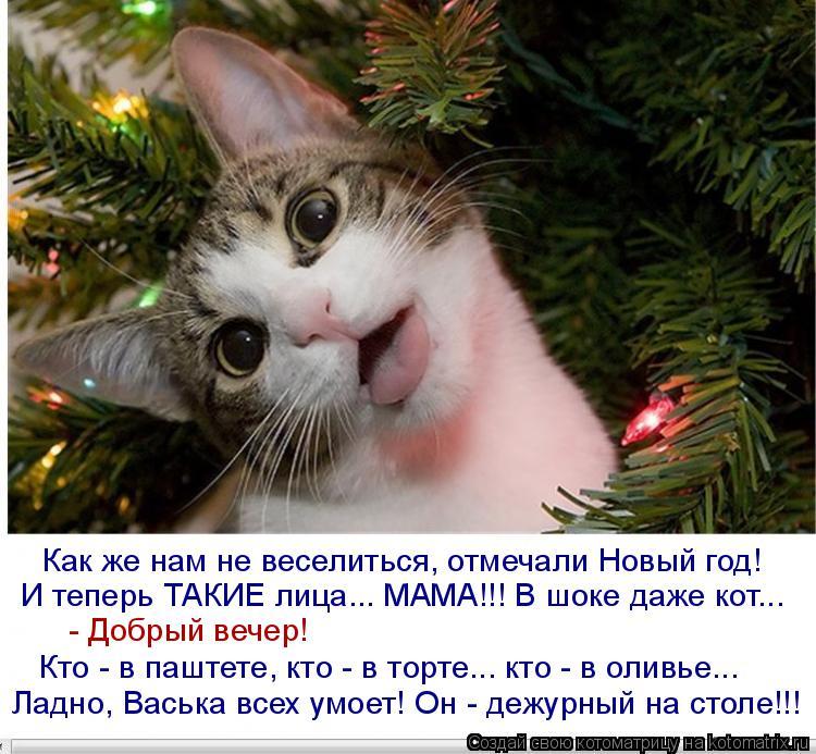 Котоматрица: Как же нам не веселиться, отмечали Новый год! И теперь ТАКИЕ лица... МАМА!!! В шоке даже кот... Кто - в паштете, кто - в торте... кто - в оливье... Ладн