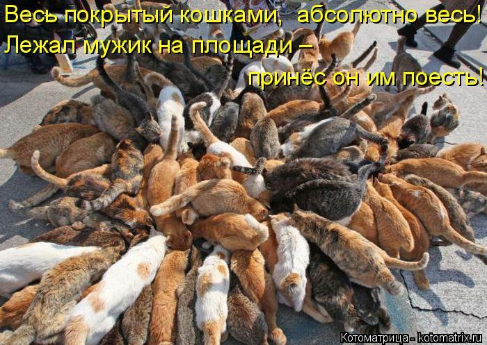 Котоматрица: Весь покрытый кошками,  абсолютно весь! Лежал мужик на площади – принёс он им поесть!