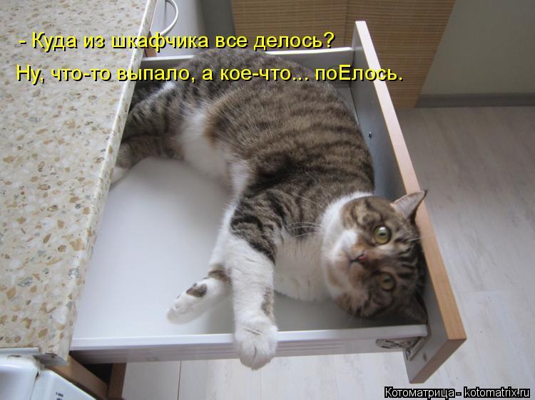 Котоматрица: Ну, что-то выпало, а кое-что... поЕлось. - Куда из шкафчика все делось?
