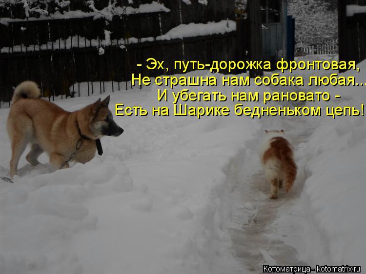 Котоматрица: - Эх, путь-дорожка фронтовая, Не страшна нам собака любая... И убегать нам рановато -  Есть на Шарике бедненьком цепь!