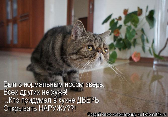 Котоматрица: Был с нормальным носом зверь, Всех других не хуже! ...Кто придумал в кухне ДВЕРЬ Открывать НАРУЖУ??!