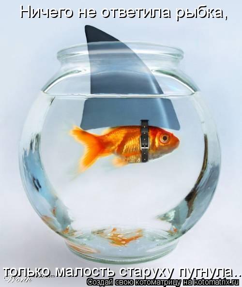 Котоматрица: Ничего не ответила рыбка, только малость старуху пугнула...