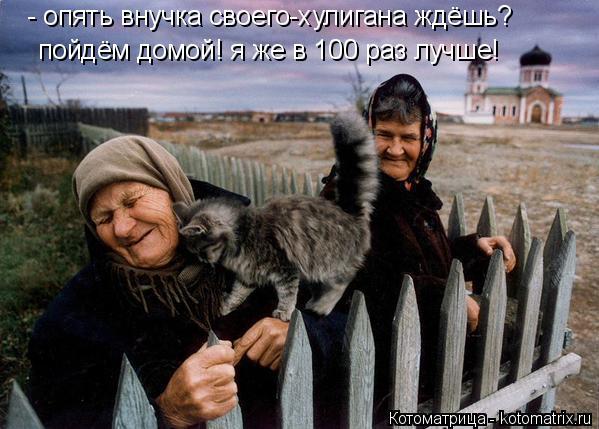 Котоматрица: - опять внучка своего-хулигана ждёшь? пойдём домой! я же в 100 раз лучше!
