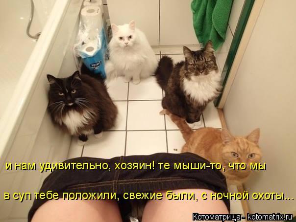 Котоматрица: в суп тебе положили, свежие были, с ночной охоты... и нам удивительно, хозяин! те мыши-то, что мы