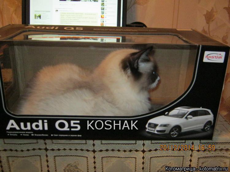Котоматрица: KOSHAK