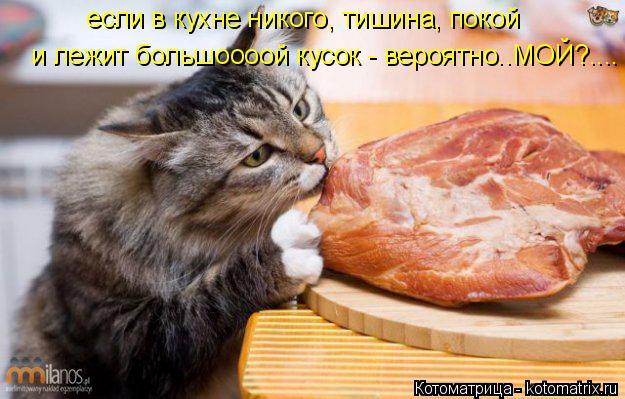 Котоматрица: если в кухне никого, тишина, покой  и лежит большоооой кусок - вероятно..МОЙ?....