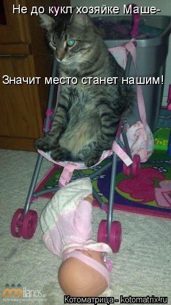 Котоматрица: Не до кукл хозяйке Маше- Значит место станет нашим!