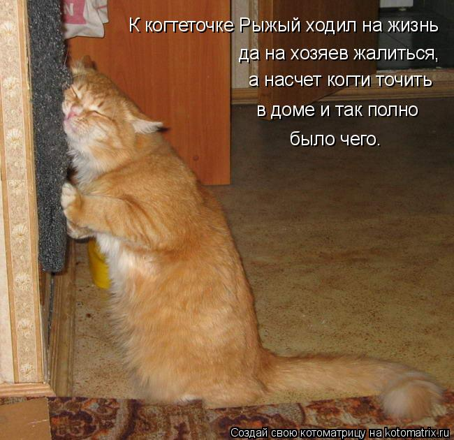 Котоматрица: а насчет когти точить да на хозяев жалиться, в доме и так полно было чего.  К когтеточке Рыжый ходил на жизнь