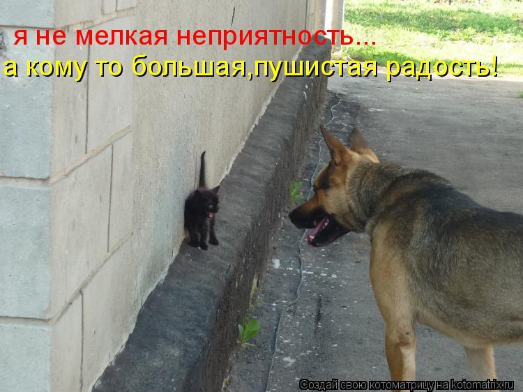 Котоматрица: я не мелкая неприятность... а кому то большая,пушистая радость!