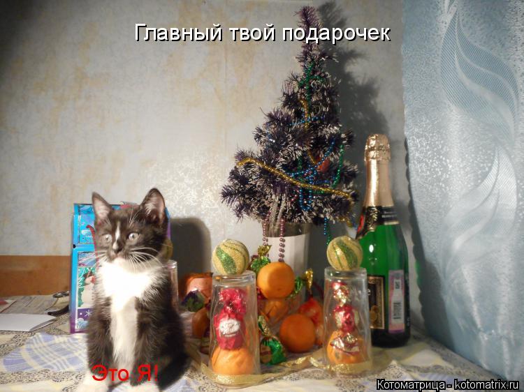 Котоматрица: Главный твой подарочек Это Я!