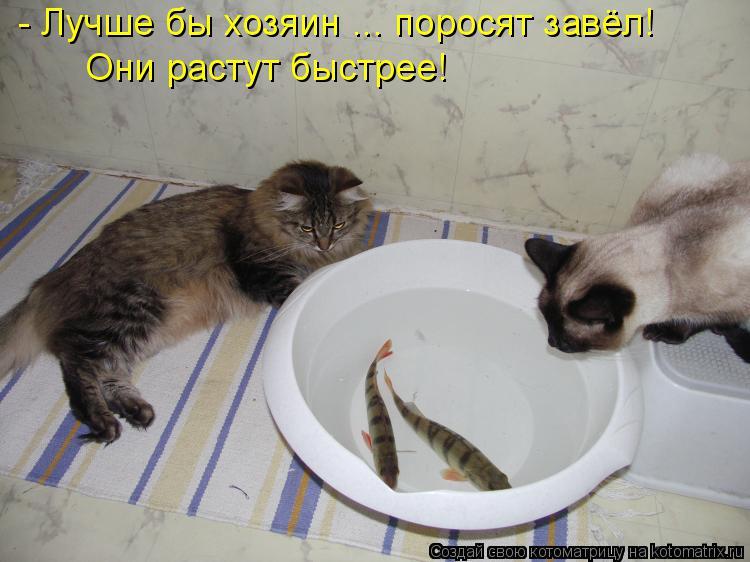 http://kotomatrix.ru/images/lolz/2015/01/06/kotomatritsa_v-.jpg