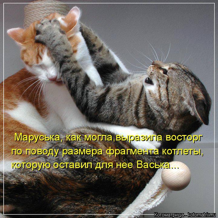 Котоматрица: Маруська, как могла,выразила восторг по поводу размера фрагмента котлеты, которую оставил для нее Васька...
