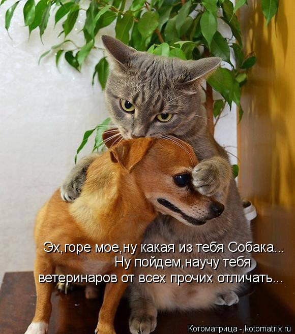 Котоматрица: Ну пойдем,научу тебя  Эх,горе мое,ну какая из тебя Собака... ветеринаров от всех прочих отличать...