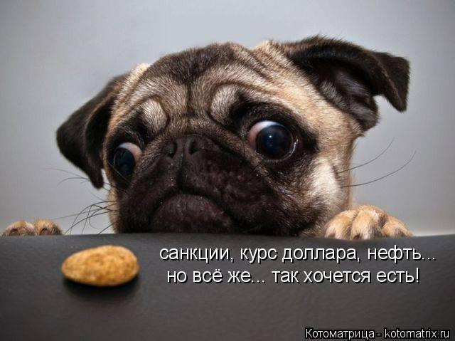Котоматрица: санкции, курс доллара, нефть... но всё же... так хочется есть!