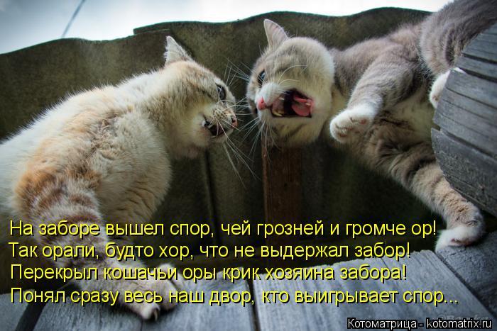 Котоматрица: На заборе вышел спор, чей грозней и громче ор!  Так орали, будто хор, что не выдержал забор!  Перекрыл кошачьи оры крик хозяина забора!  Понял с
