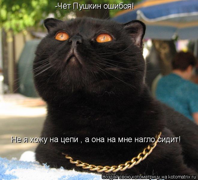 Котоматрица: -Чёт Пушкин ошибся! Не я хожу на цепи , а она на мне нагло сидит!