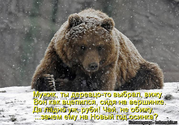 http://kotomatrix.ru/images/lolz/2015/01/08/kotomatritsa_-i.jpg