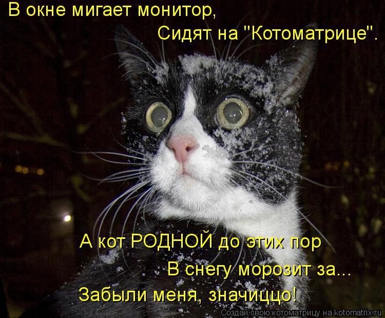 """Котоматрица: В окне мигает монитор,   Сидят на """"Котоматрице"""". А кот РОДНОЙ до этих пор В снегу морозит за... Забыли меня, значиццо!"""