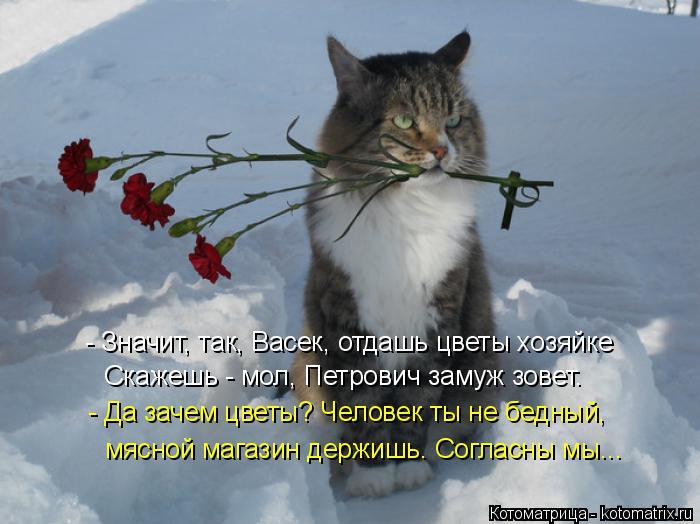Котоматрица: - Значит, так, Васек, отдашь цветы хозяйке Скажешь - мол, Петрович замуж зовет. - Да зачем цветы? Человек ты не бедный, мясной магазин держишь. С