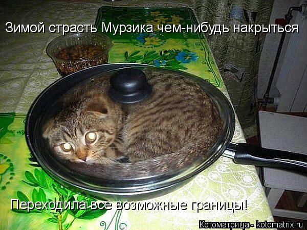 Котоматрица: Зимой страсть Мурзика чем-нибудь накрыться Переходила все возможные границы!
