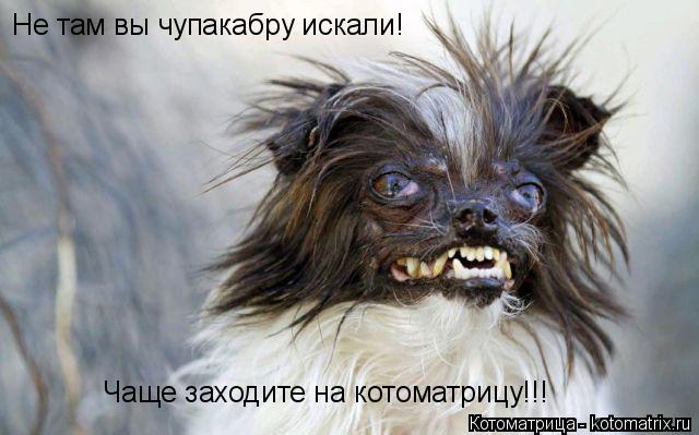Котоматрица: Не там вы чупакабру искали! Чаще заходите на котоматрицу!!!