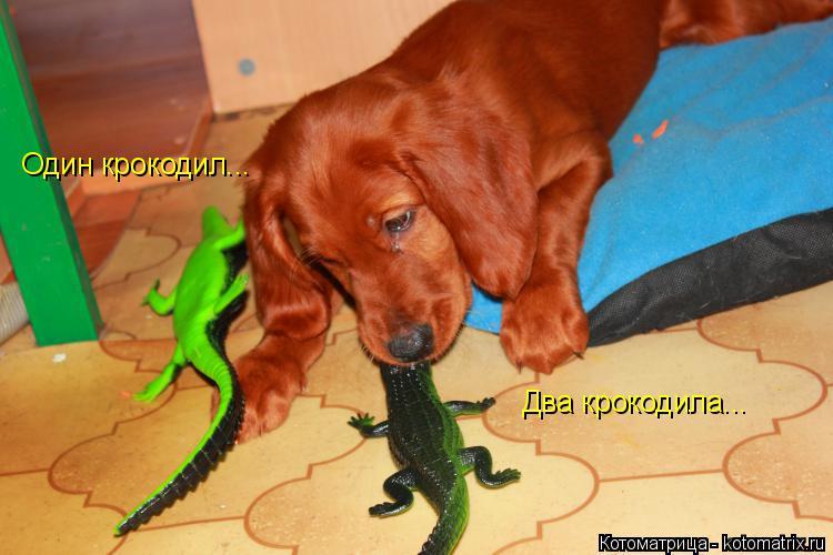 Котоматрица: Один крокодил... Два крокодила...