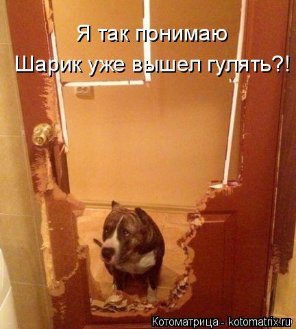http://kotomatrix.ru/images/lolz/2015/01/08/kotomatritsa_ex.jpg