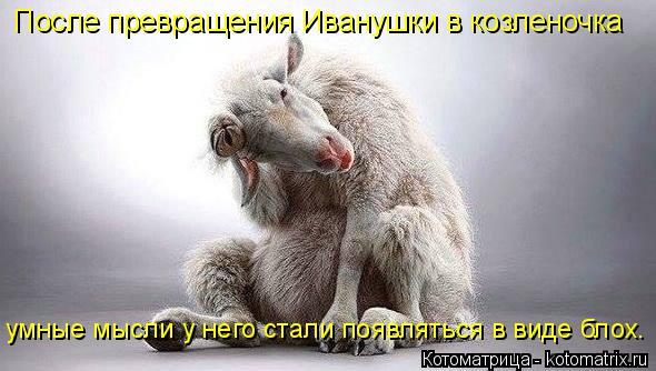 Котоматрица: После превращения Иванушки в козленочка умные мысли у него стали появляться в виде блох.